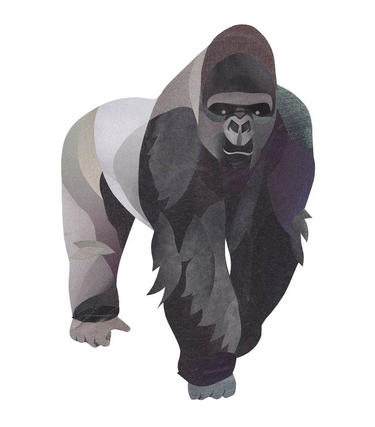 africa gorilla silverback illustration