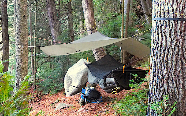 appalachian tent hamock on tree woods