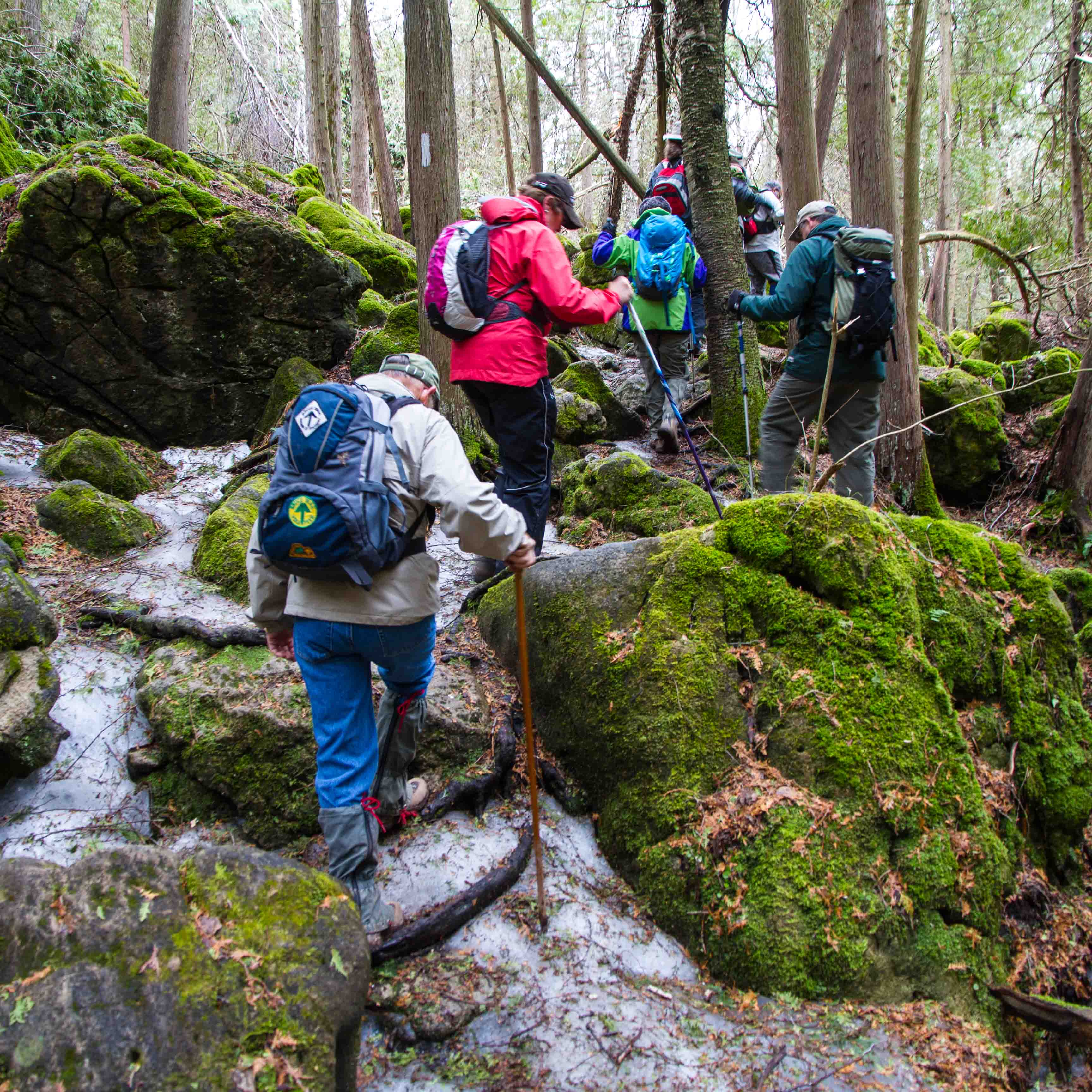 appalachian trekkers on trail up