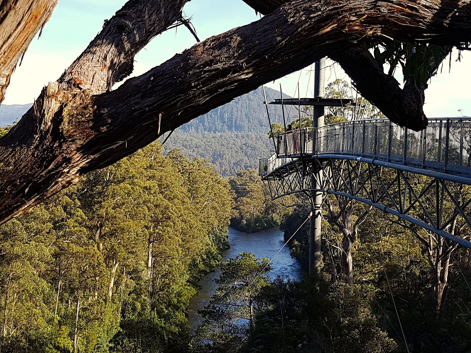 canopy floresta tropical Tahune Airwalk