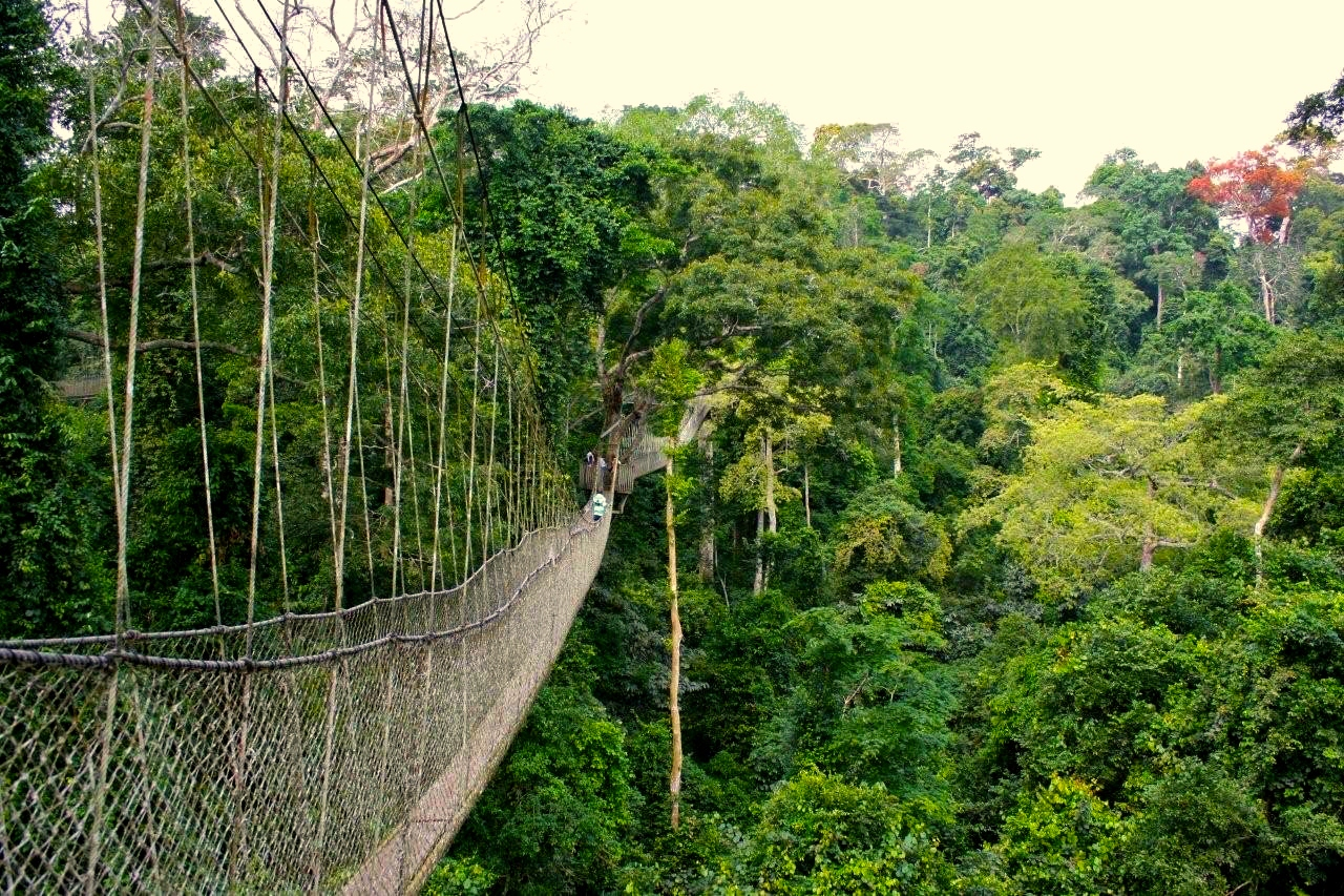 canopy ghana kakum nat park tourists walkway forest