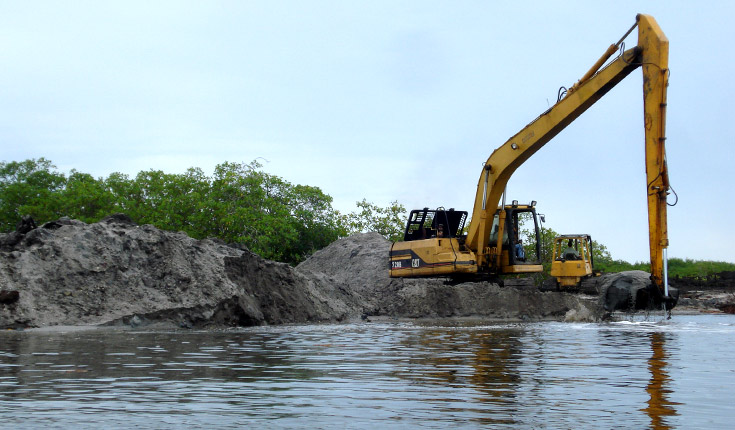 noticias illegal mangrove development